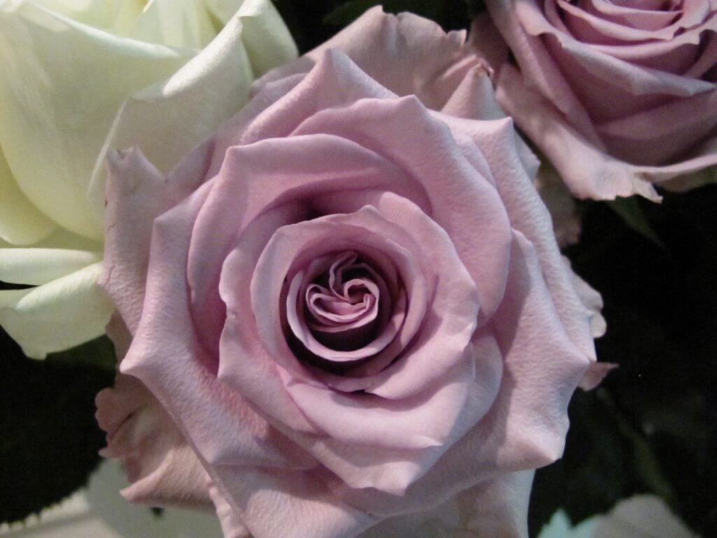 rozy_sorta