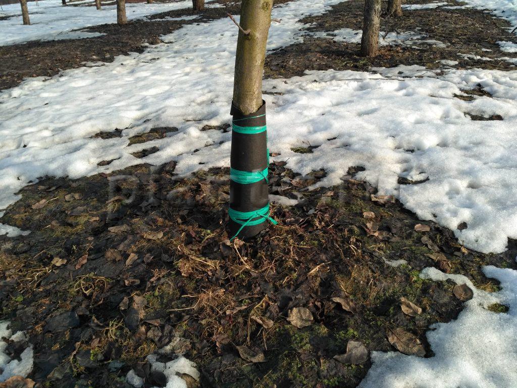 Защита ствола от грызунов