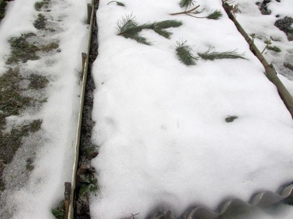 Грядки под снегом