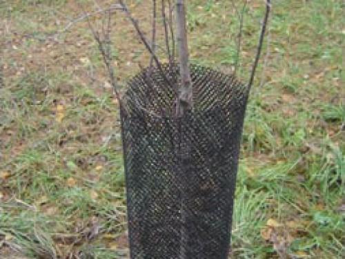 Защита от зайцев сеткой