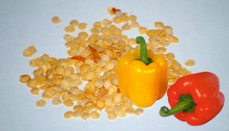 как подготовить перец к посеву на рассаду